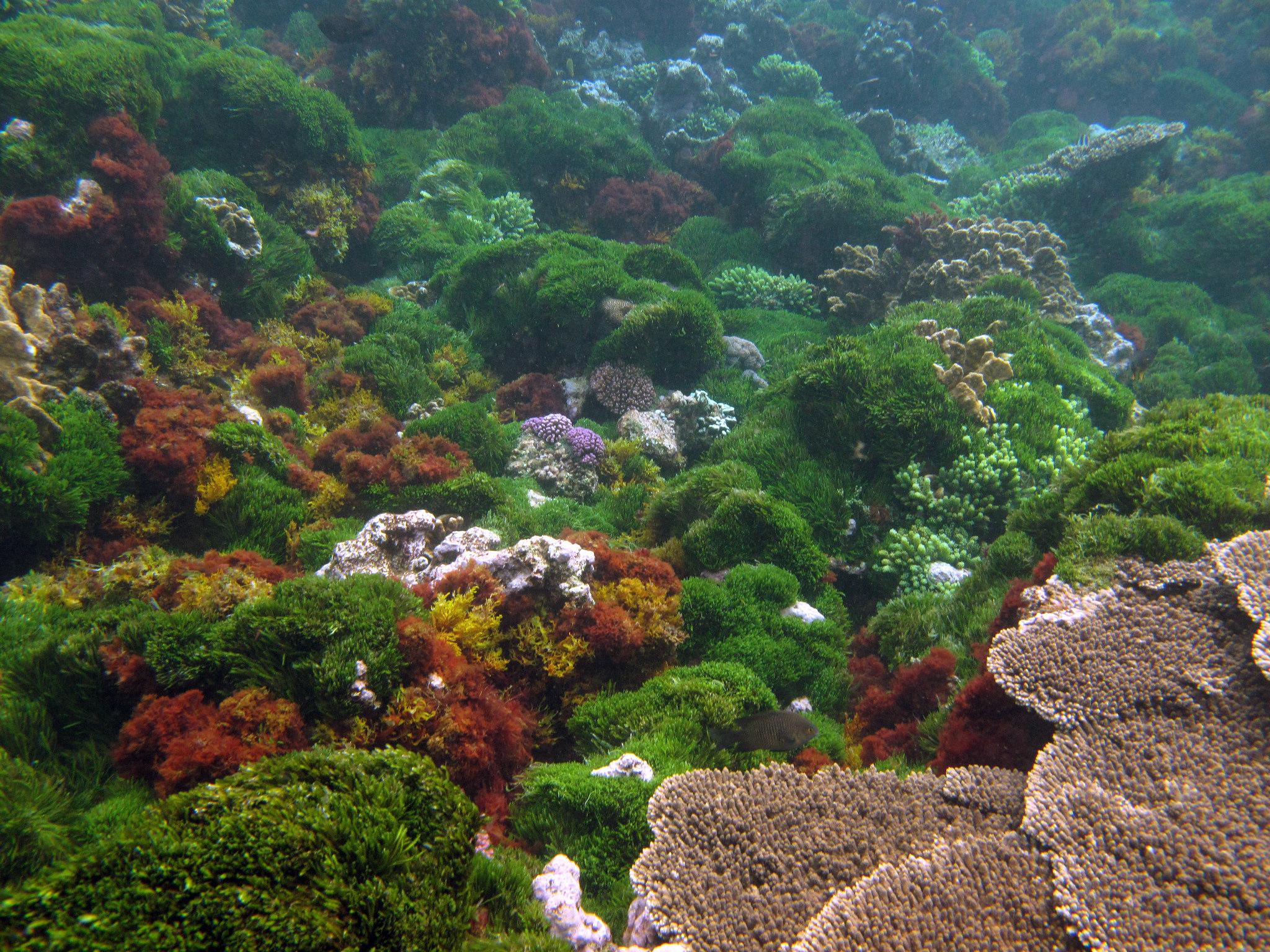 HorseShoe Reef | © patchtok/Flickr