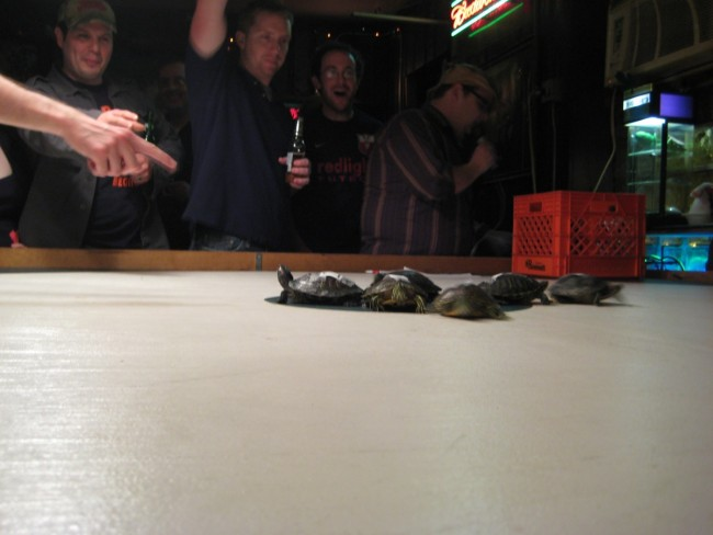 turtle racing! | © Jeff Easter/Flickr