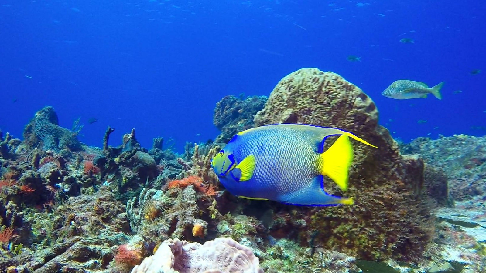 The 15 Most Beautiful Coral Reefs In The World  The 15 Most Bea...