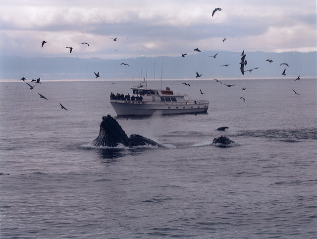 Whale Watching Monterey © Smart Destinations/Flickr