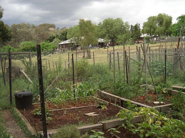 800px-Collingwood_Children's_Farm_-_plots_and_animals