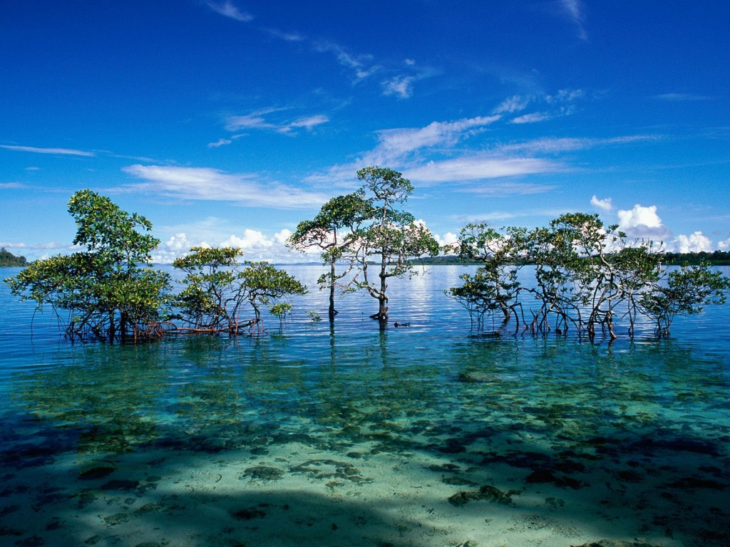 The emerald waters of Havelock Island| © Flickr/Codex41