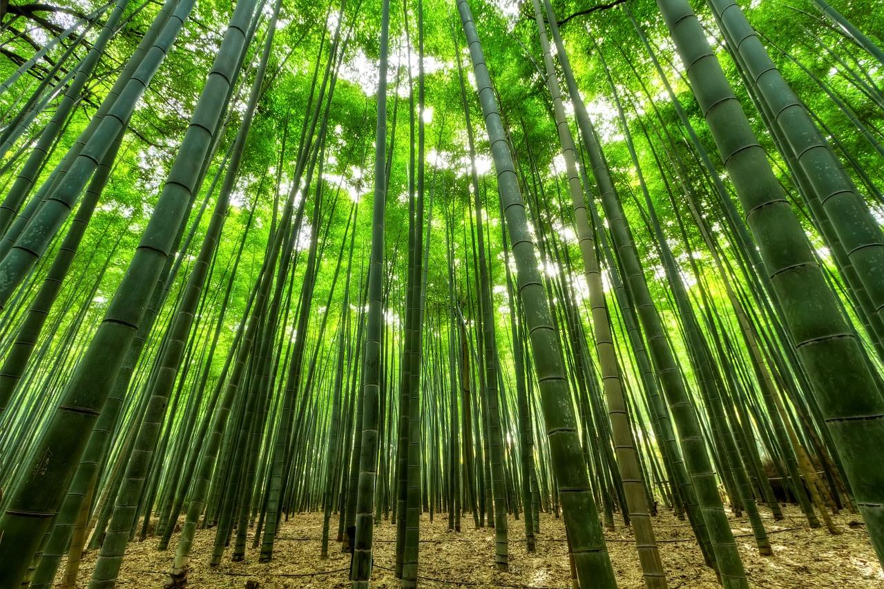 Bamboo | Pixabay