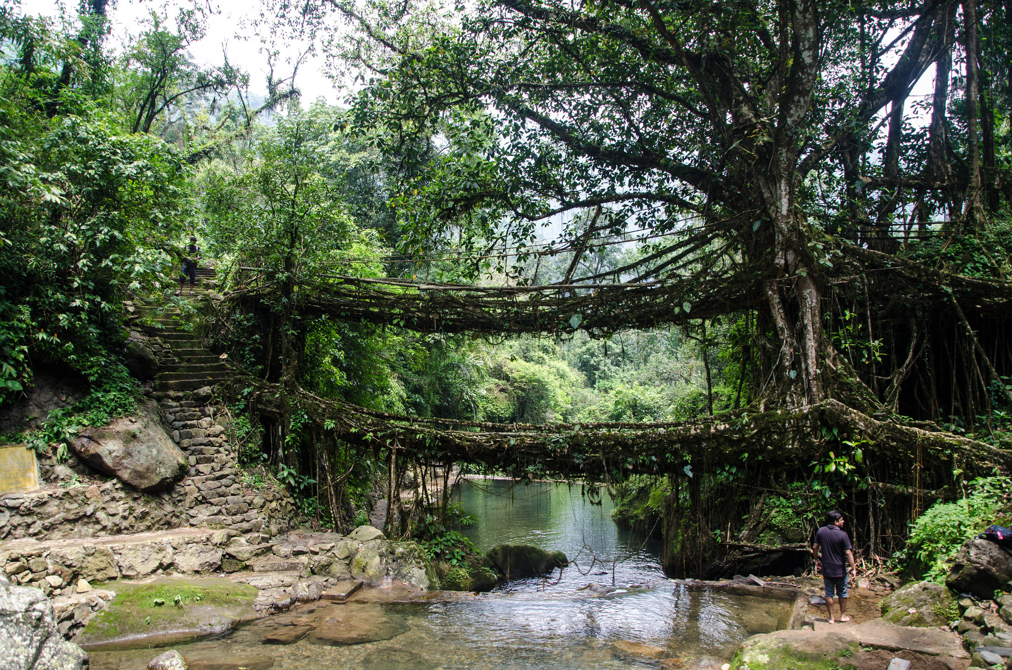 Double Decker Living Root Bridge | © Ashwin Kumar/Flickr