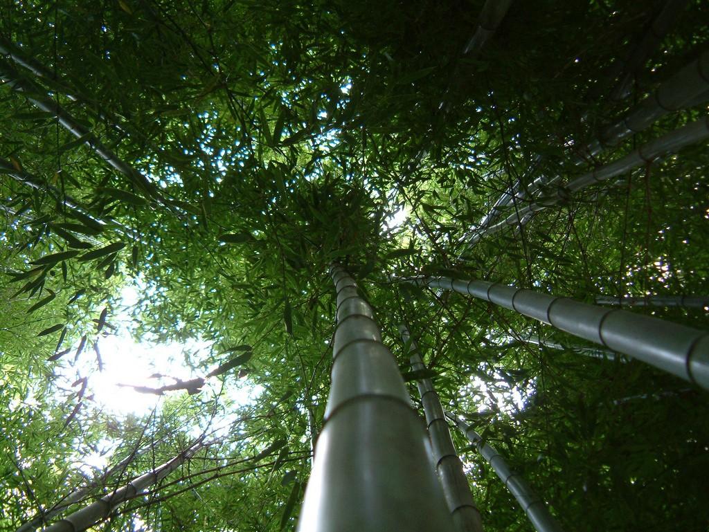 Bamboo at Royal Botanic Gardens, Melbourne | © Matthew Hadley/Flickr