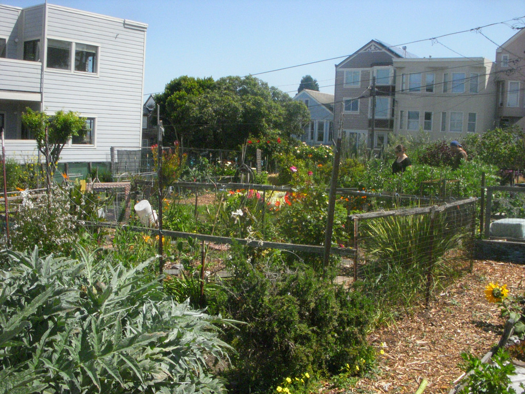 The Coolest Community Gardens In San Francisco