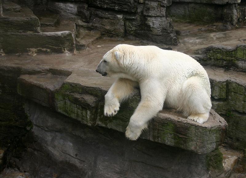 Polar bear (Schonbrunn, Vienna) © Ivo Jansch/Flickr