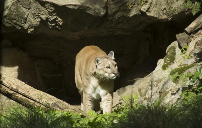 queens zoo| © moises terrero/flickr