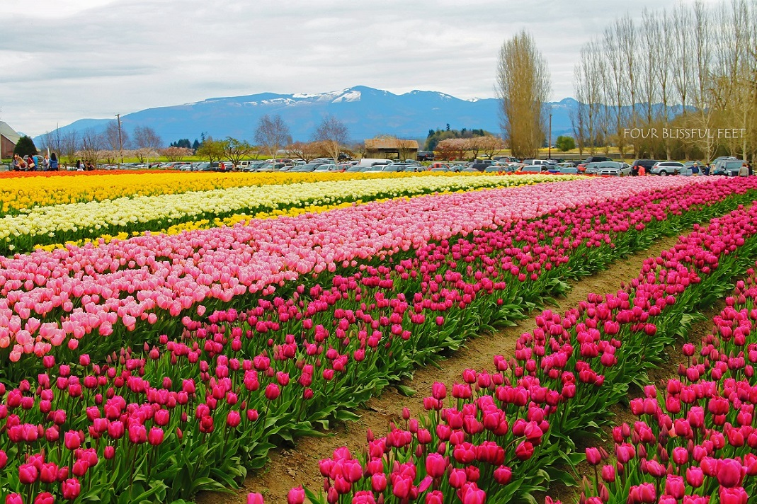 map of albany new york with 6 Places To Enjoy Tulip Festivals Around The World on Map also Top 5 New York Movie Tours furthermore Hudson River Cruises also Monroe zipcodes moreover 6 Places To Enjoy Tulip Festivals Around The World.