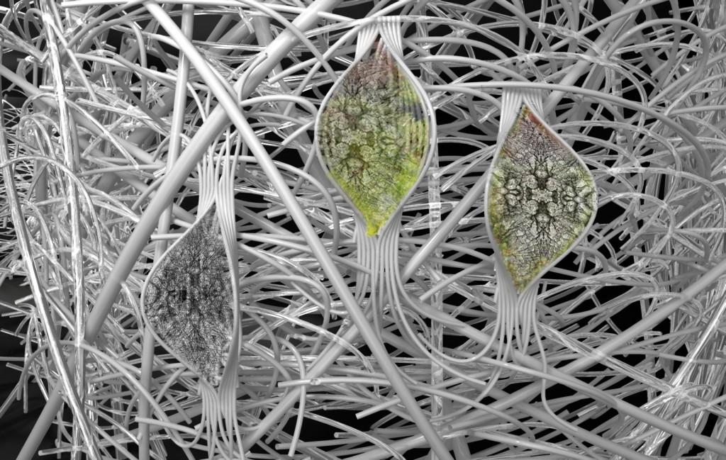 03_LifeObject_breathing cell
