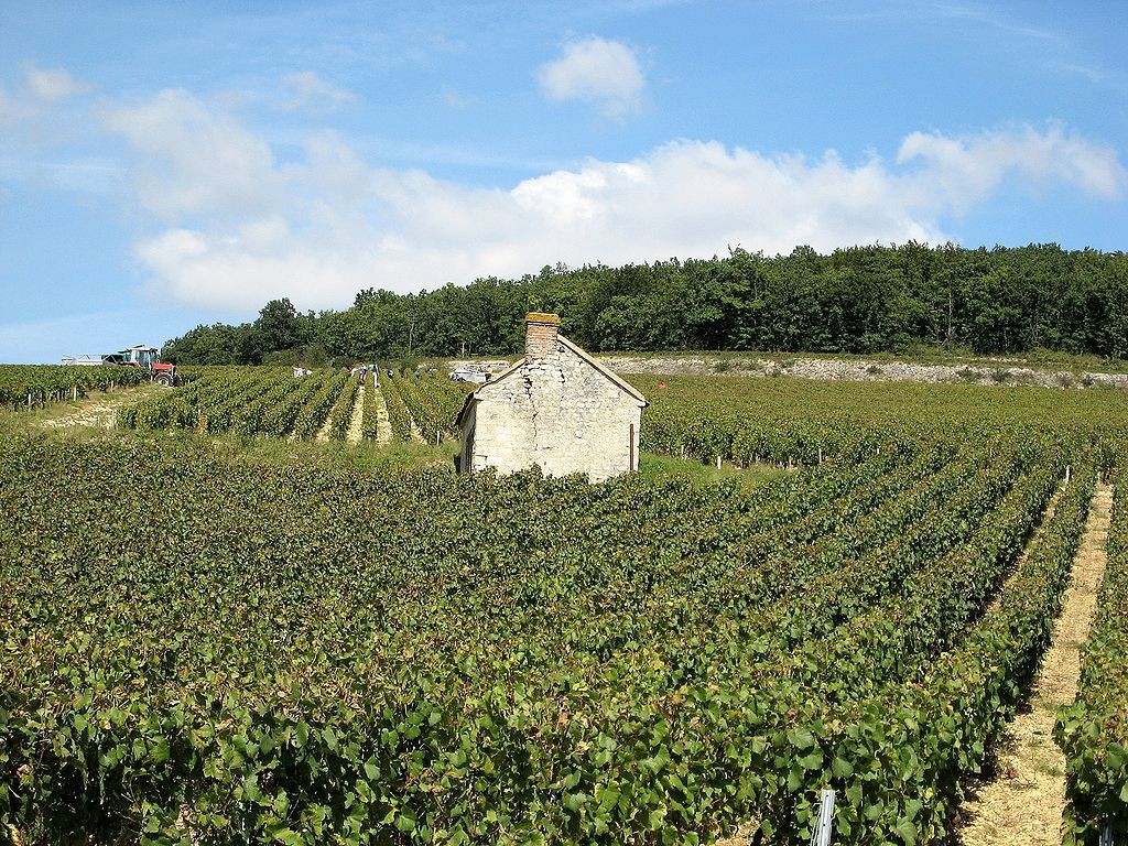 Harvest in Chablis - © CocktailSteward/Wikicommons