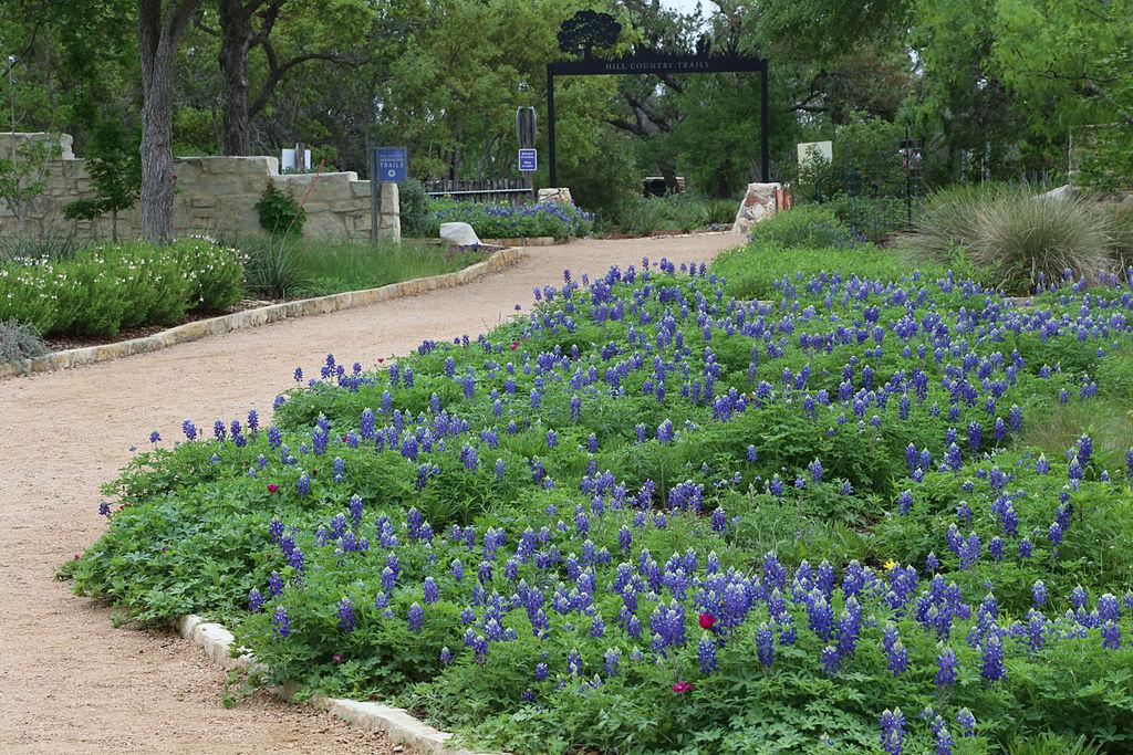 Lady Bird Wildflower Center | © Dcrjsr/Wikimedia Commons