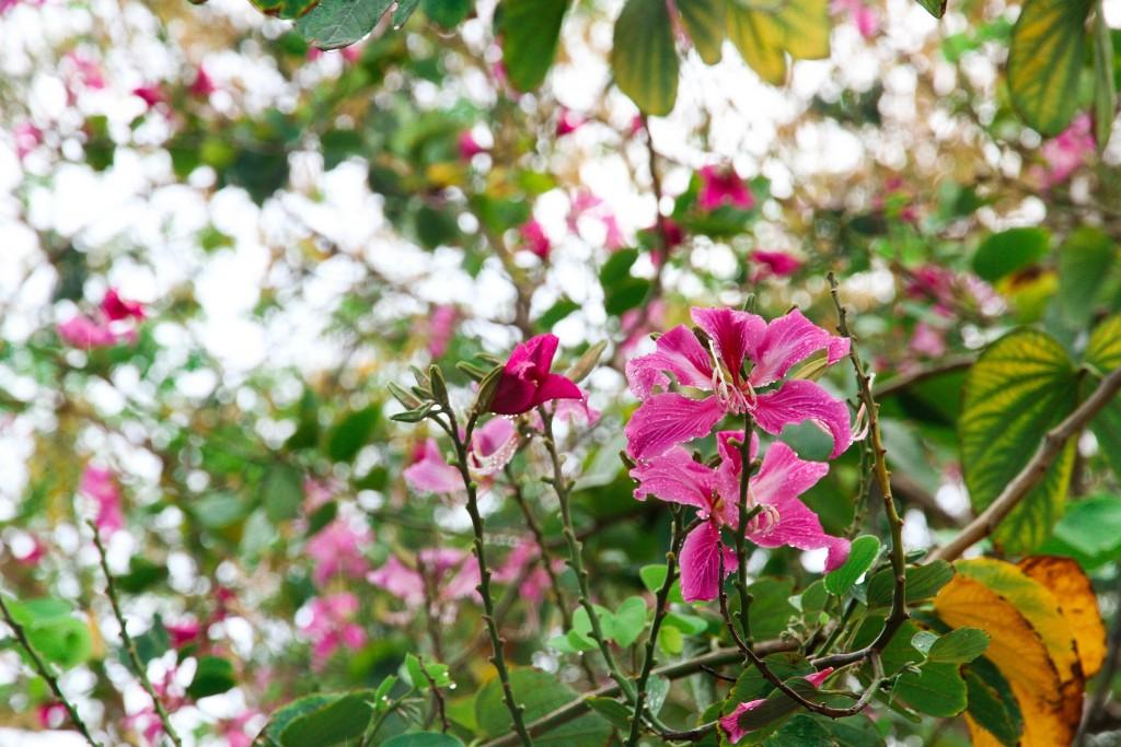 Flowers on the U.S. Virgin Islands   © Zippo S/Flickr
