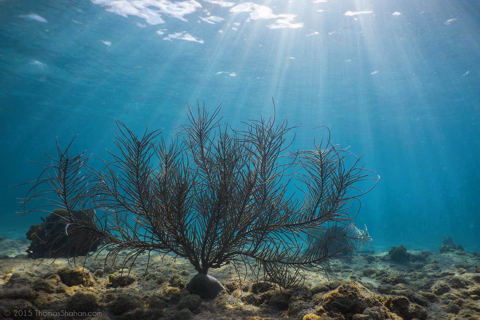 Diving in Puerto Rico | © Thomas Shahan/Flickr