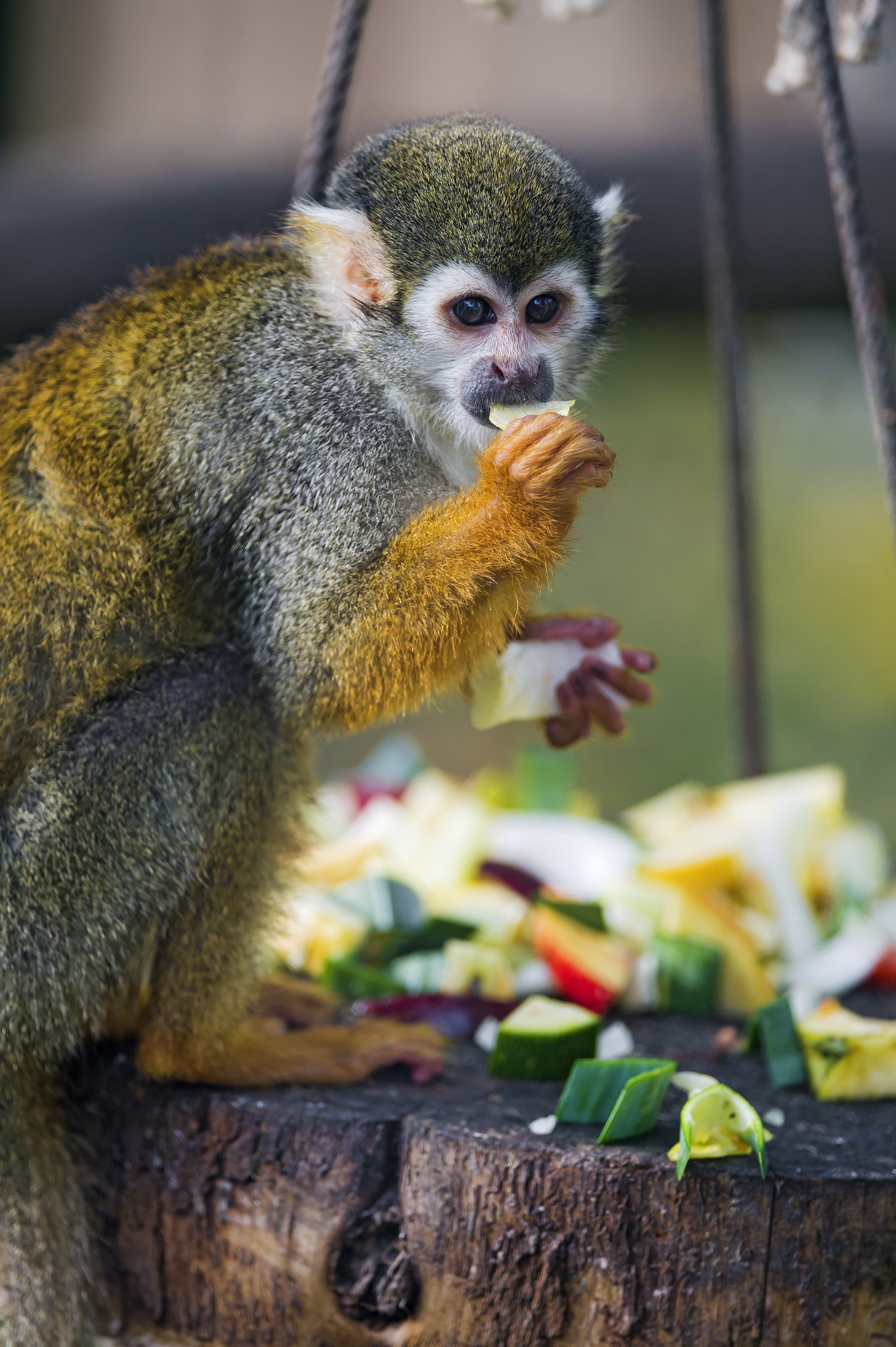 Monkey eating fruit | © Tambako The Jaguar/Flickr