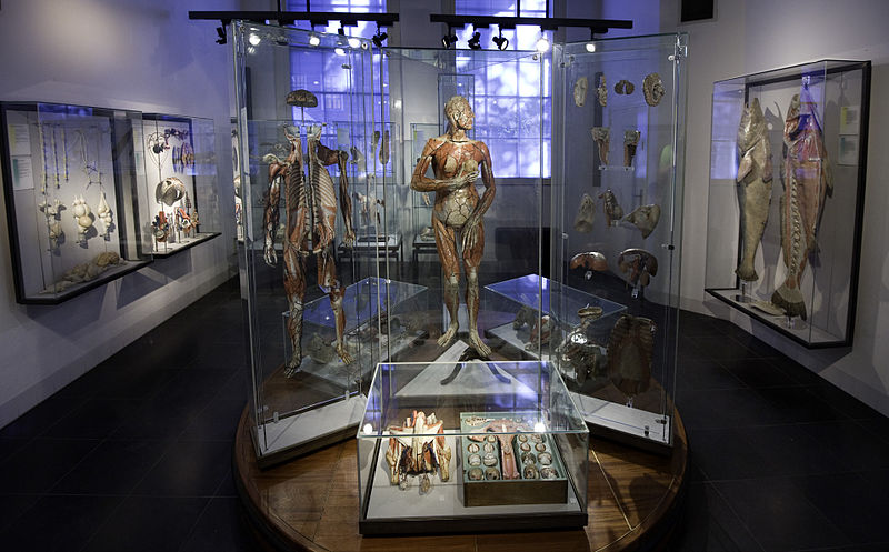 Museum Boerhaave   © Rob Koopman/WikiCommons