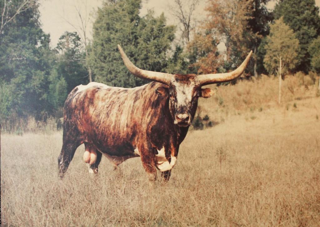 The Bull | © John Flannery/Flickr