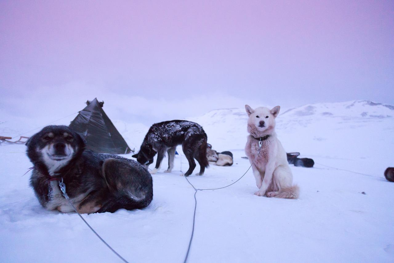 Your friends on Svalbard | © Noel_Bauza/Pixabay