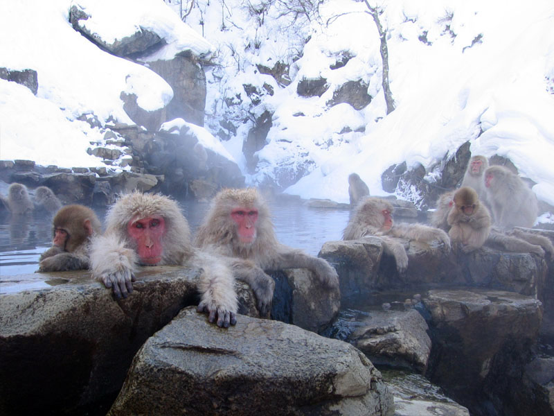 Macaques in a hot spring | © Yosemite/WikiCommons
