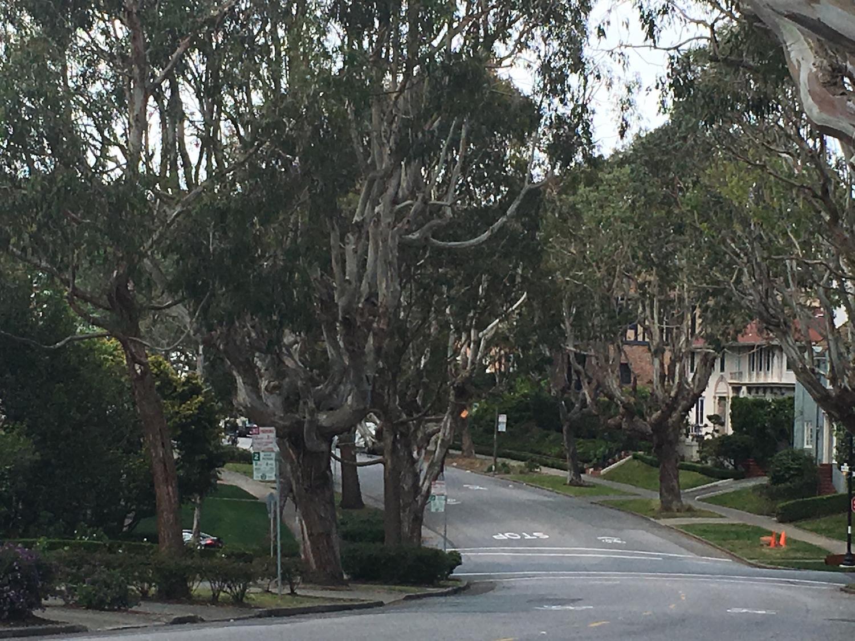 St. Francis Wood street view | © Edissa Nicolás