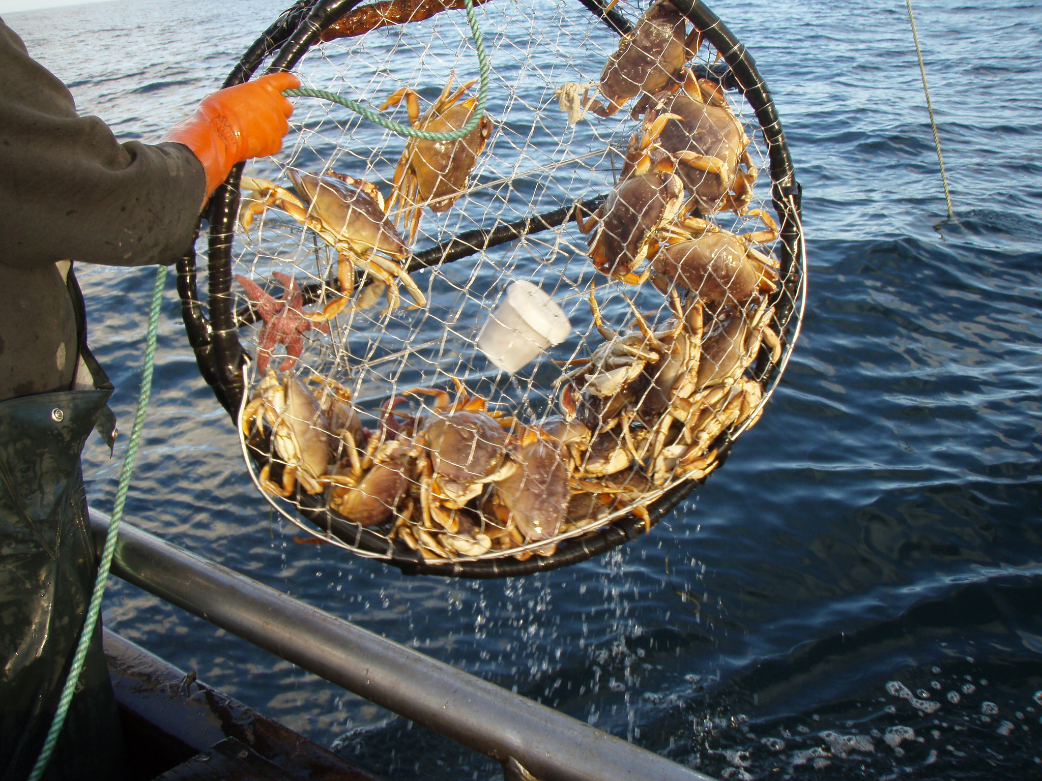 Everything you need to know about dungeness crab in san for Best fishing in california