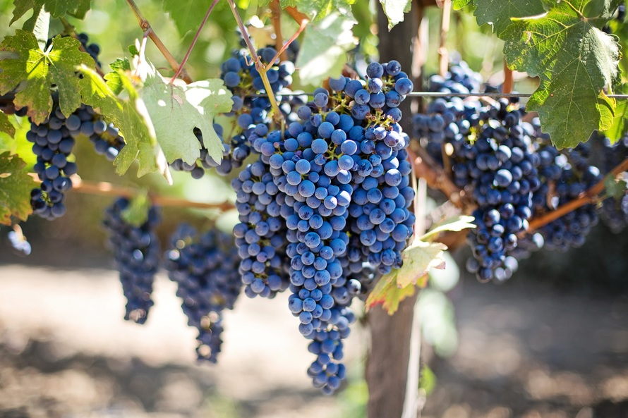 Purple Grapes - © Mark III/Pixabay