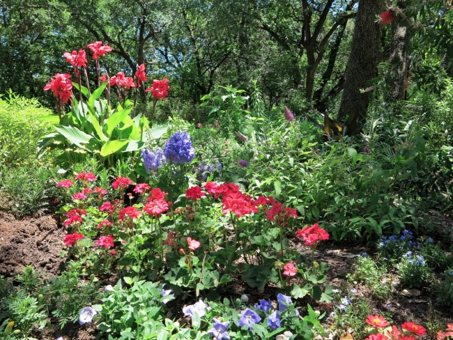 10 Beautiful Gardens Of Austin, Texas