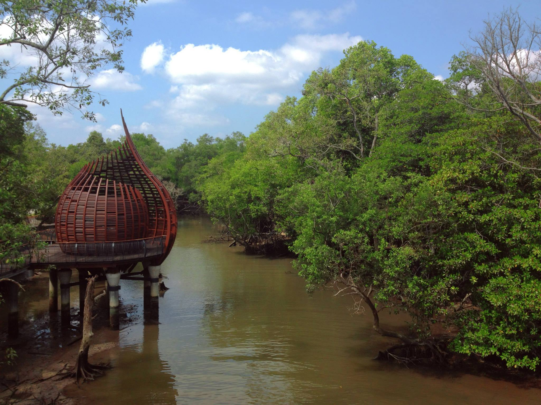 Deep inside the mangroves © Andrew Darwitan