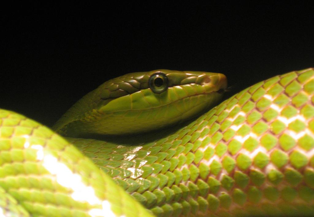 Snake | © Kristine Paulus/Flickr