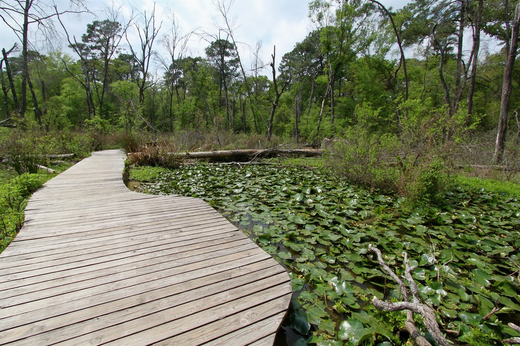 Houston Arboretum | ©Roy Luck/Flickr
