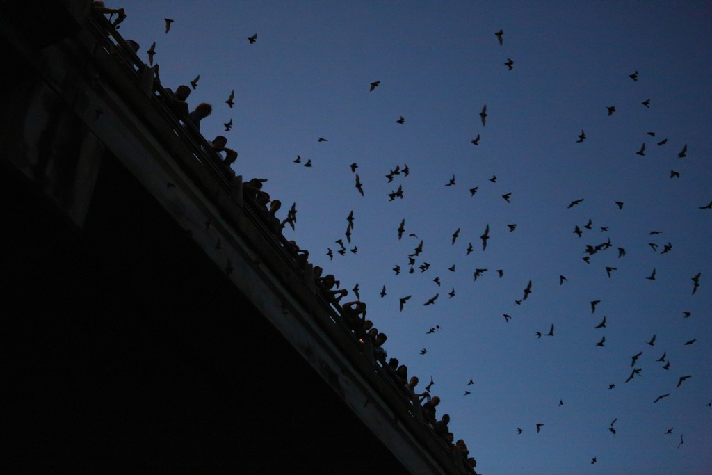 Congress Bats | © Lars Plougmann/Flickr