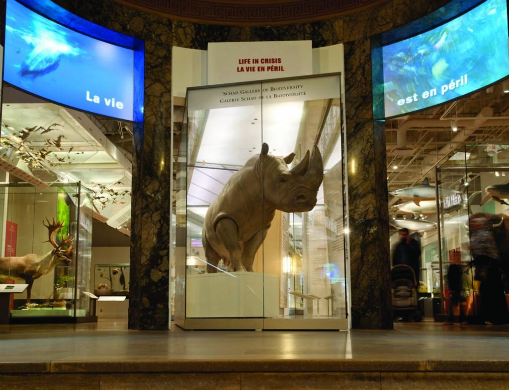 Bull The White Rhino | Courtesy of Royal Ontario Museum