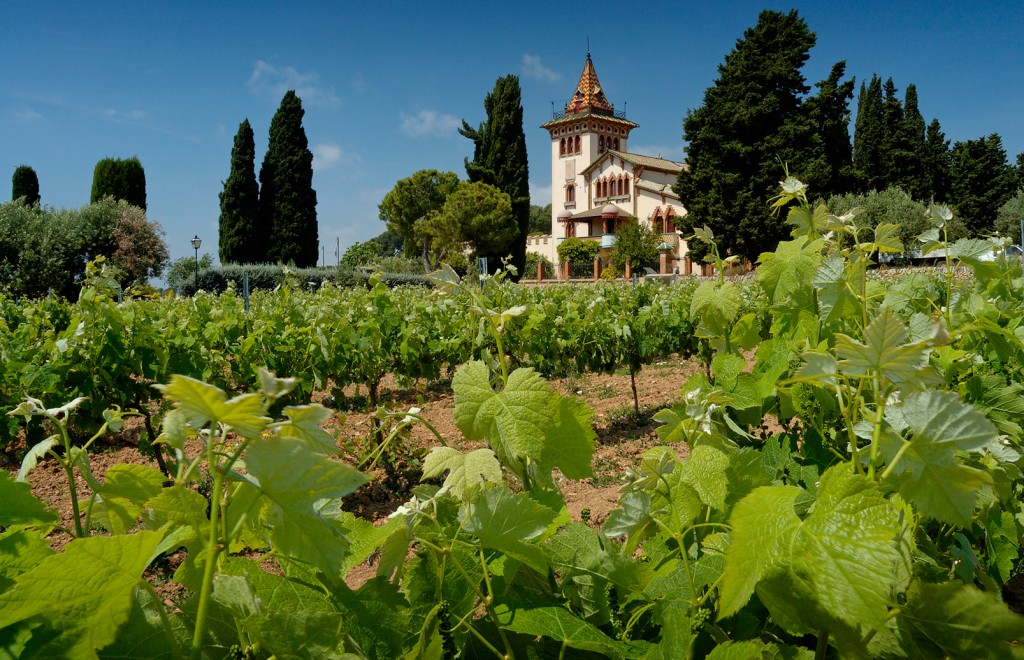 Touring the Best Wineries & Vineyards in Catalonia in a Car