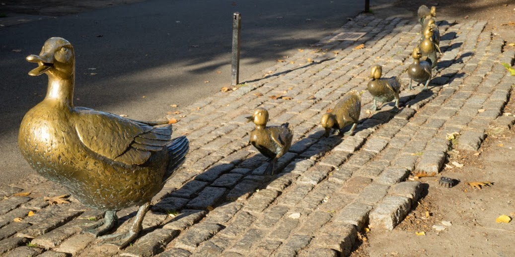 Make Way For Ducklings | © Rachael Elana Photography