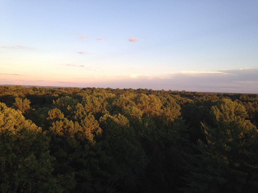 View from Hickory Ridge Fire Tower | Courtesy of Carley Lanich