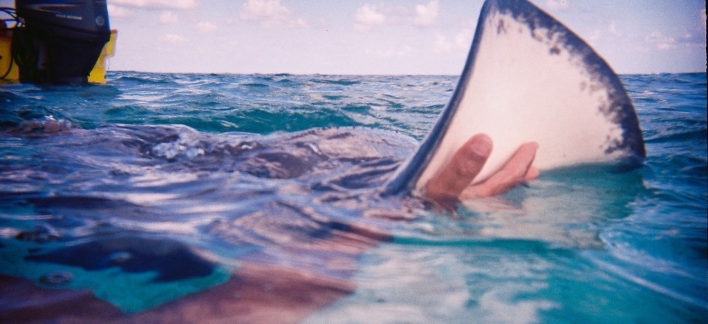 Shark Ray Alley | Courtesy of Michelle Razavi