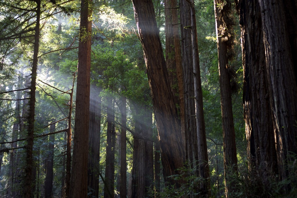 Muir Woods © Julian Fong/Flickr