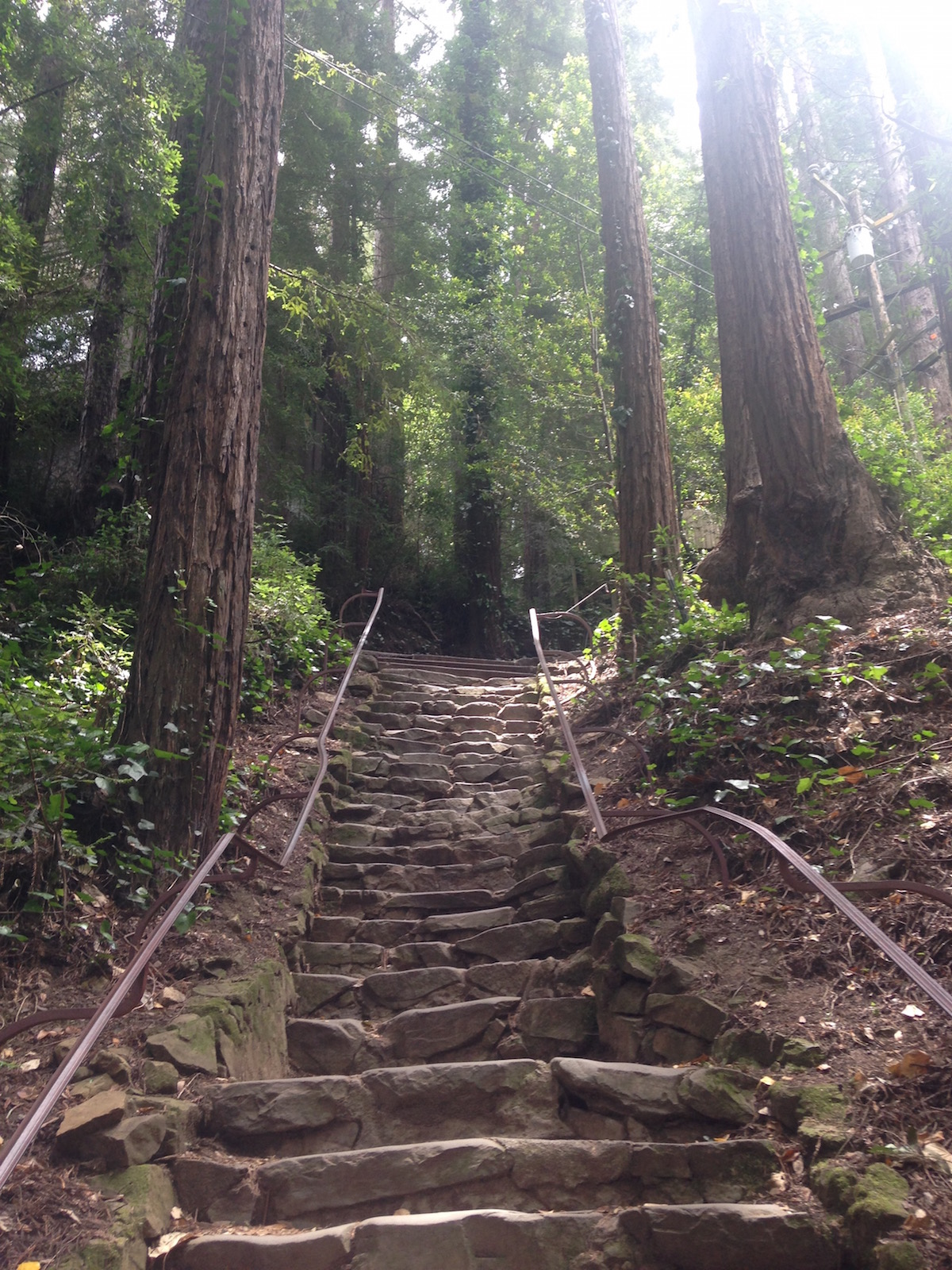 The Dipsea steps © Danielle Chemtob