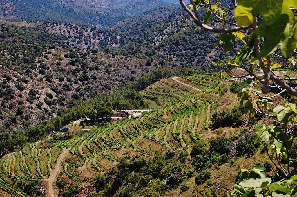 The Priorat region | ©MARIA ROSA FERRE ✿ / WikiCommons