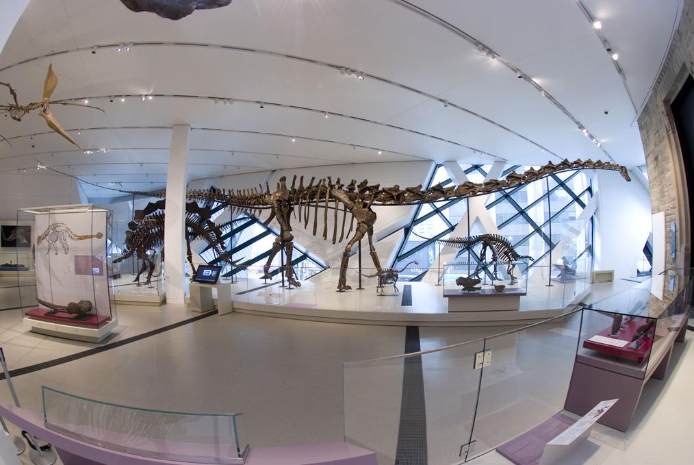 Barosaurus | Courtesy of Royal Ontario Museum