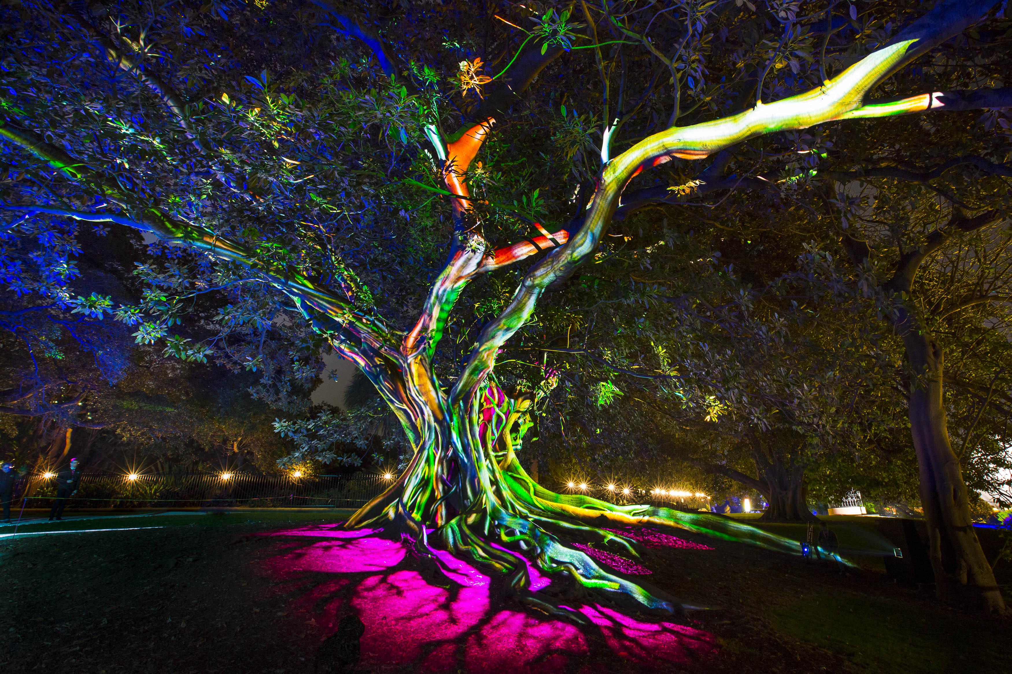 vivid festival turns sydney into a magical wonderland