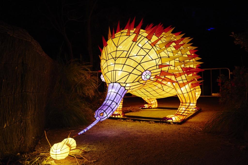 Taronga Zoo | Courtesy of Vivid Sydney