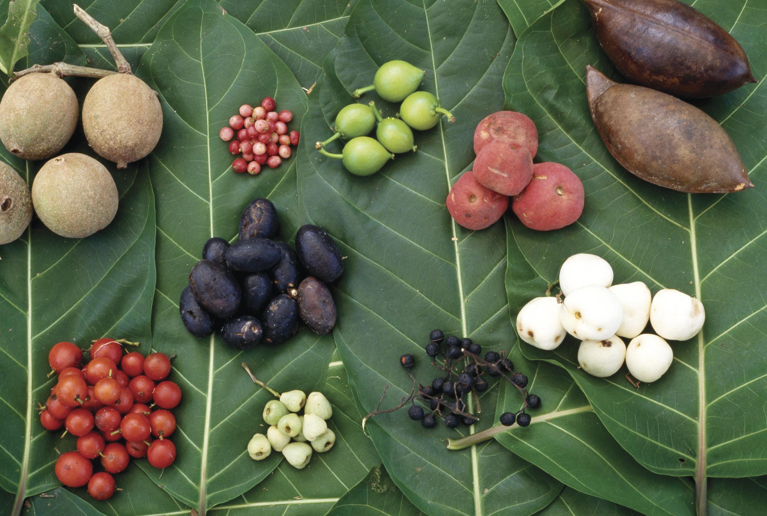 Native Plant Foods To Australia
