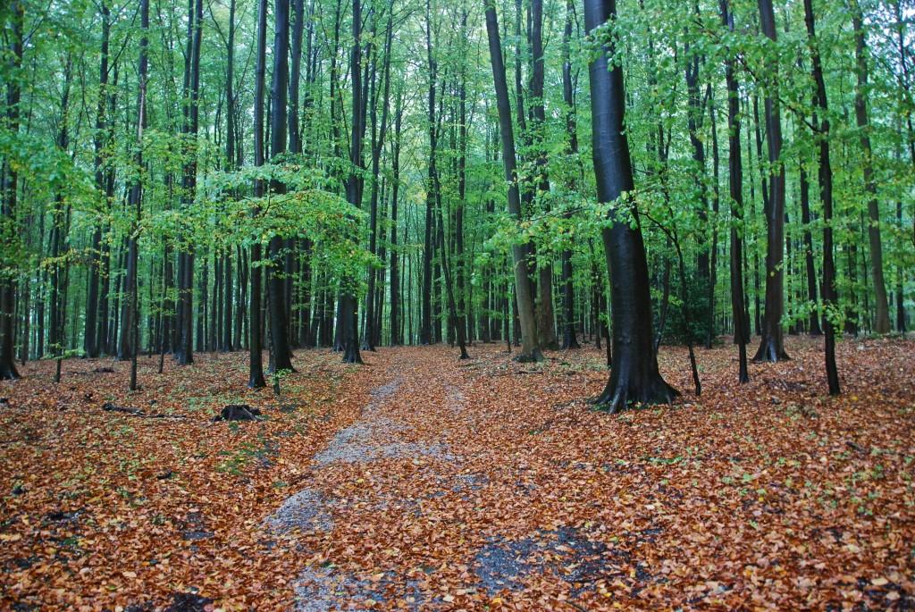 Parc de Tervuren, Brussels | © Stephane Mignon/Flickr