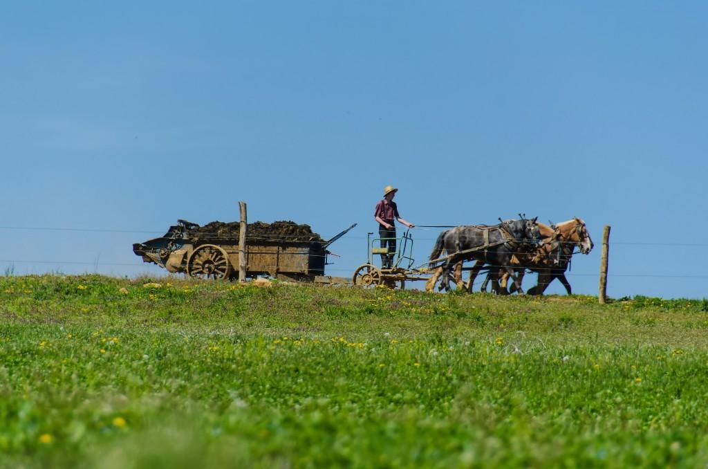 Amish Farming © likeaduck/Flickr