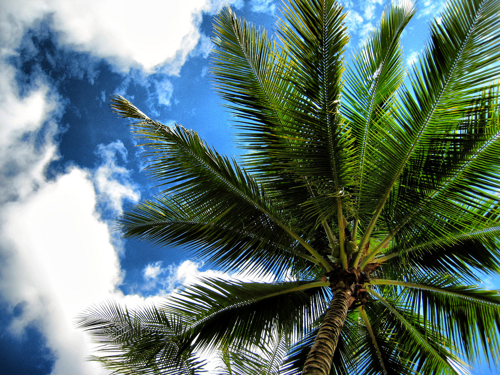 Palm And Clouds | © Joan Campderrós-i-Canas/Flickr