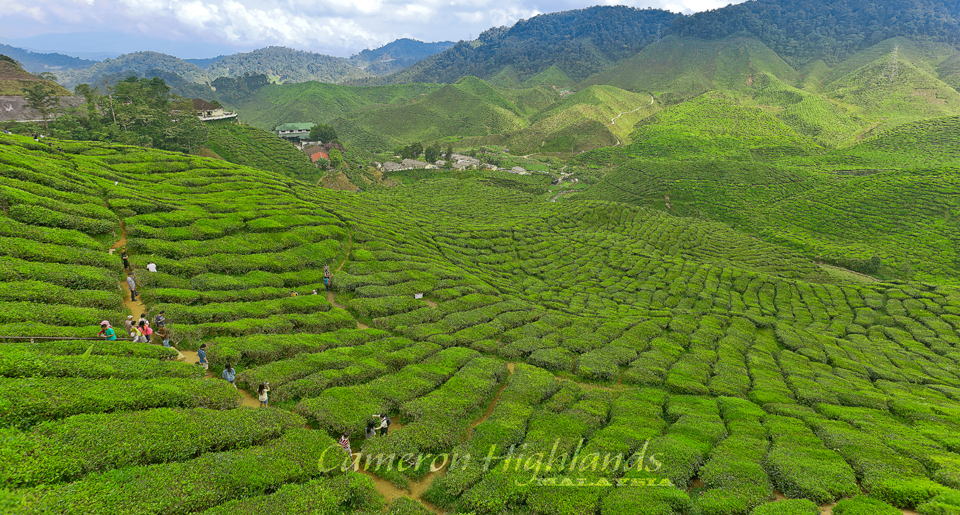 Cameron Highlands | © Musimpanas/Flickr