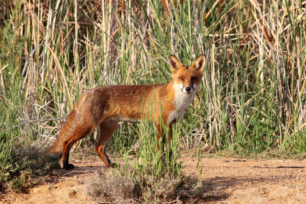 Australia's Most Invasive Species