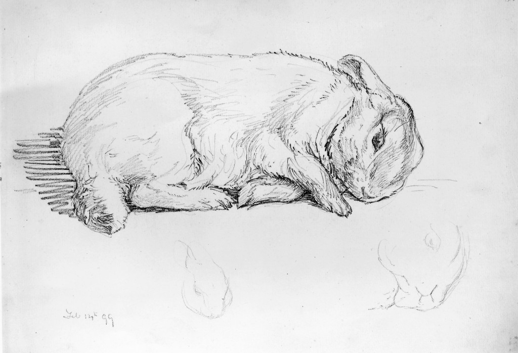 The study of Potter's rabbit, Peter Piper, drawn by Beatrix Potter (1889) | Courtesy of V&A with kind permission of Frederick Warne & Co