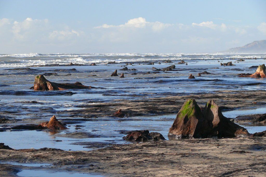 The submerged forest of Borth at Borth beach | © Ian Medcalf/Geograph.org
